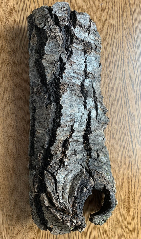 Aspen Bark, One large solid piece, approximately 16x7 inches