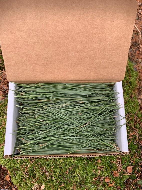 PINE NEEDLES, FRESH, 4 ounces, red pine