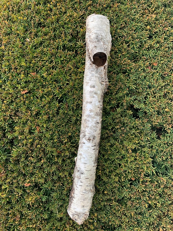 White Birch Tube, approximately 21 inches long and 2 inches diameter