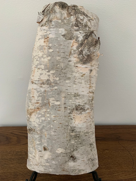 White Birch Bark, approx 16 inches x 8 inches, flat and firm