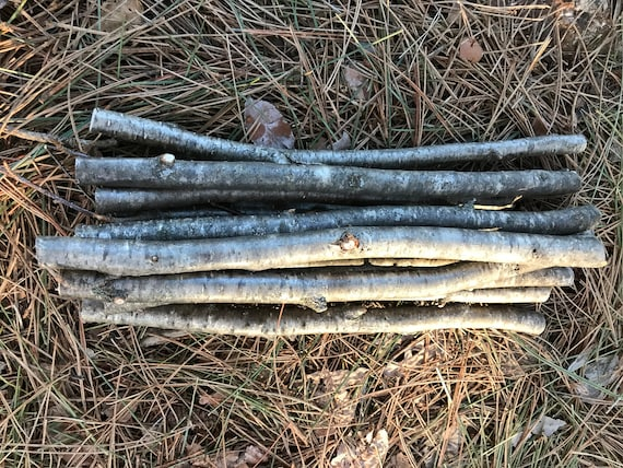 Yellow Birch Sticks, 12 Golden Brown Branches, 12 in length, 1/2 to 3/4 diameter