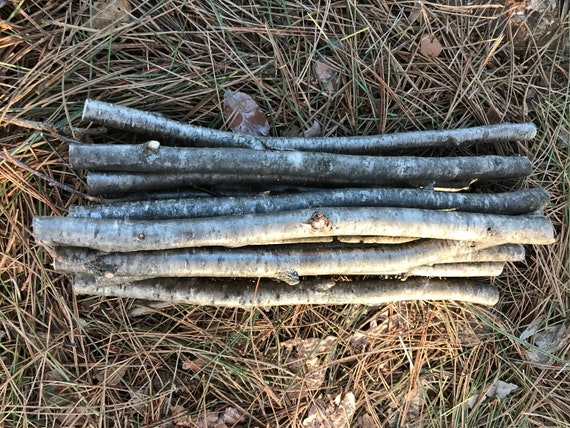 Yellow Birch Sticks, 12 Golden Brown Branches, 12 in length, 1/2 to 3/4 inch diameter