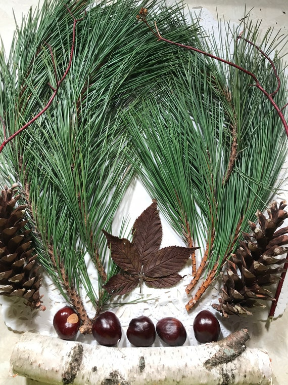 Pine Needles, Pine Cones, Chestnuts, white birch with a splash of Dogwood Red Osier, Outdoor Sample Pack