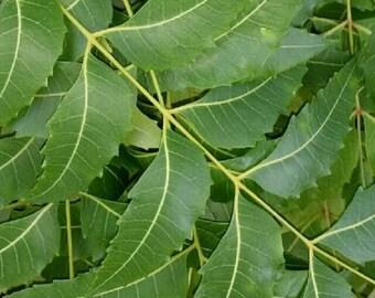 Eco Seeds