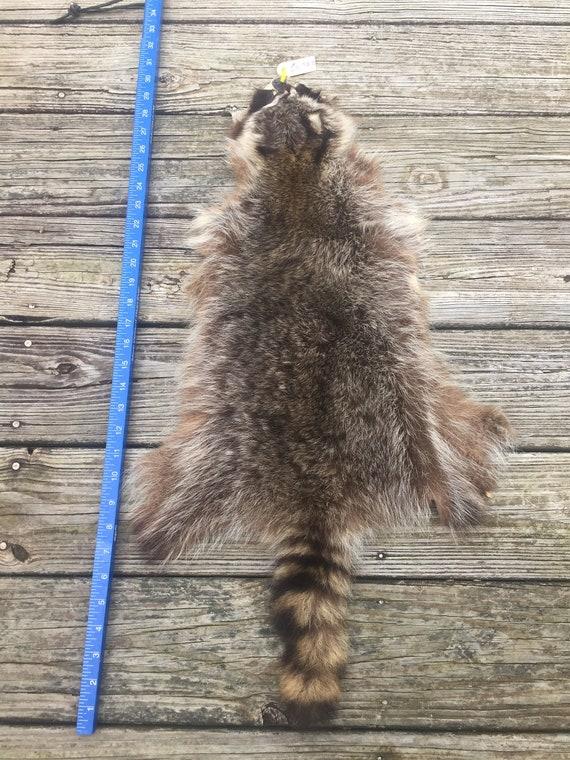 taxidermy pelt # 2nd quality trophy # fur hat # ## Red FOX skin