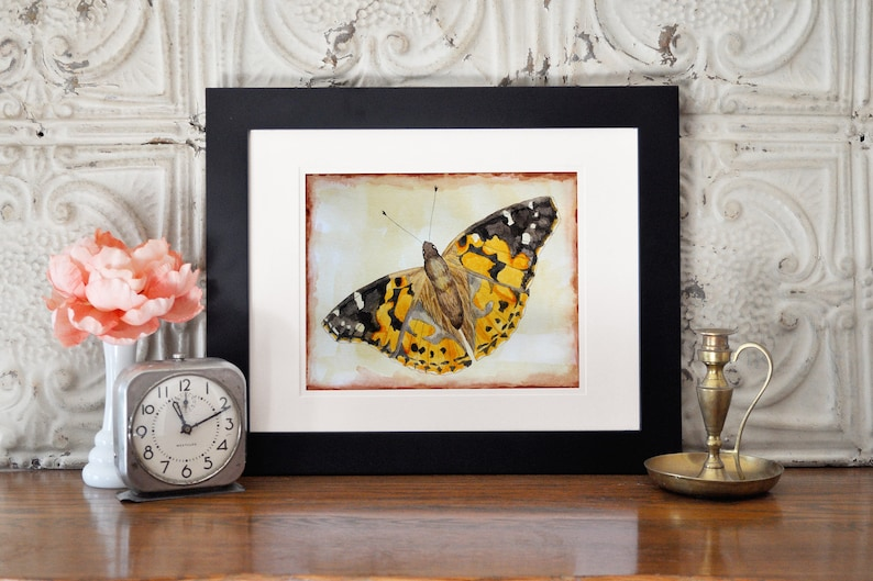 Butterfly Art  Science Illustration Insect Art Science image 0