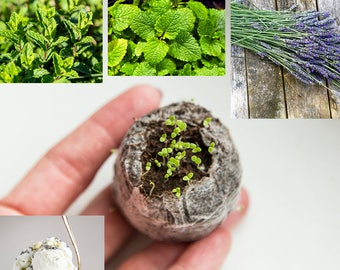 Housewarming gift plant seed growing kit, dessert herbs mix, flavor herb for sweets, peppermint, lavender, melissa for Kitchen, Balcony