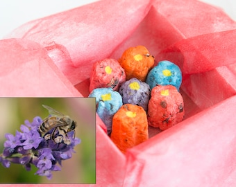 Seed bomb pack, wild flowers save the bees seed bombs, handmade colorful flower seed bombs eco friendly gift, plantable bee friendly flowers