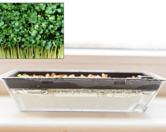 Vegan microgreen kit gift, sprouting pack yellow mustard greens, housewarming gift, grow it yourself kit, micro greens hydroponic tray set