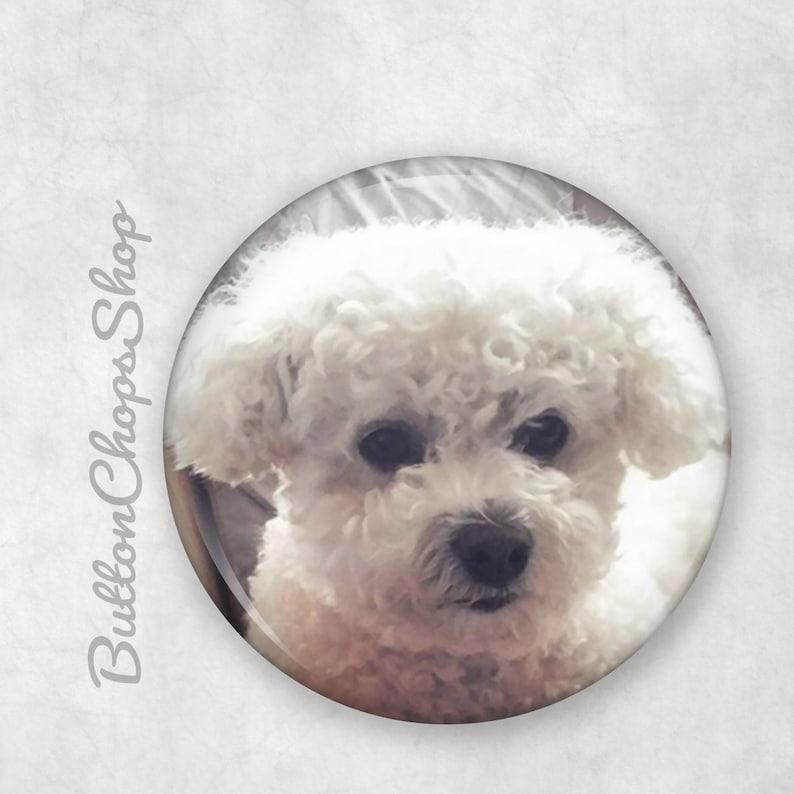 Bichon Frise Dog pin 1.5 pinback badge dog button image 0