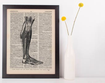 Anatomical Leg Muscle Dissection Dictionary Art Print, Medical Anatomy Vintage