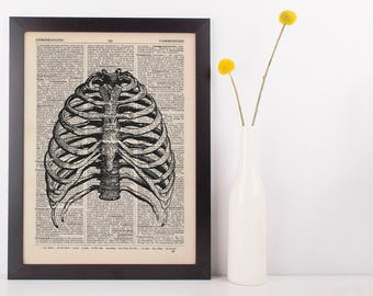 Anatomical Ribcage Dictionary Art Print,Medical Anatomy Vintage Rib Cage Medical