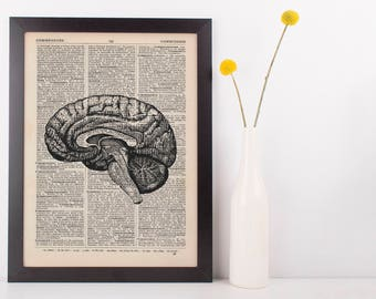 Anatomical Brain Dissection Dictionary Art Print, Medical Gross Anatomy Vintage