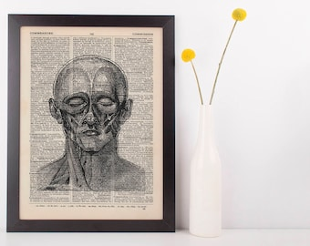 Anatomical Front Face Muscles Diss Dictionary Art Print, Medical Anatomy Vintage