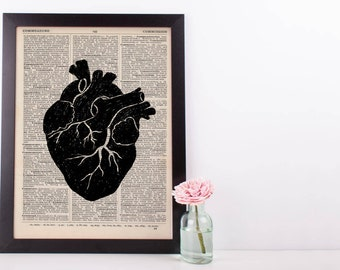 Anatomical Heart Anatomy Dictionary Print