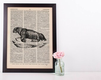 Walrus Dictionary Illustration Art Print Vintage Sea Life Nautical