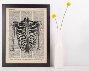 Anatomical Torso & Arms Skeleton Dictionary Art Print,Medical Anatomy Vintage