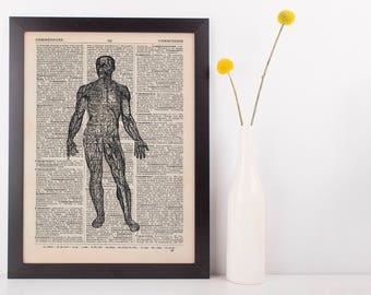 Anatomical Front body Muscles Dictionary Art Print, Medical Anatomy Vintage
