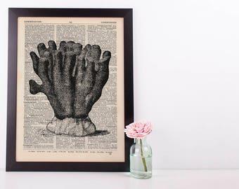 Sea Coral Dictionary Illustration Art Print Vintage Sea Life Nautical