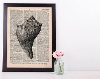 Fighting Conch Dictionary Illustration Art Print Vintage Sea Nautical