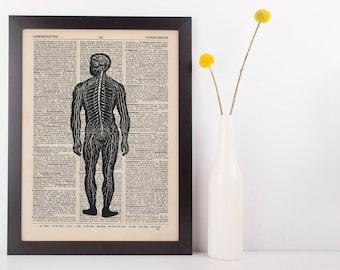 Anatomical Back Nerve Dictionary Art Print, Medical Anatomy Vintage