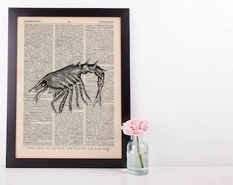 Prawn Dictionary Illustration Art Print Vintage Sea Life Nautical