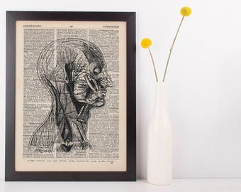 Anatomical Sd Face Muscle Structure Dictionary Art Print,Medical Anatomy Vintage