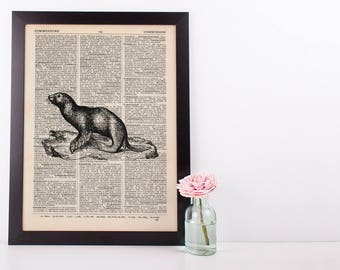 Seal Dictionary Illustration Art Print Vintage Sea Life Nautical