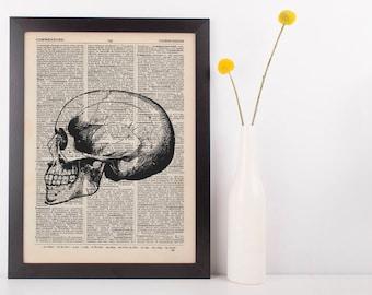 Anatomical Side Skull Dictionary Art Print,Medical Anatomy Vintage