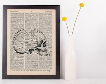 Anatomical Brain Areas in Skull Dictionary Art Print, Medical Anatomy Vintage