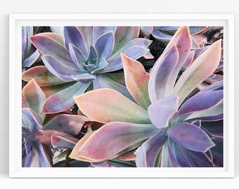 Pastel Succulent Print, Plant Art Printable, Tropical Leaf Print, Home Decor, Plant Wall Print, Succulent Photography, Succulent Wall Print
