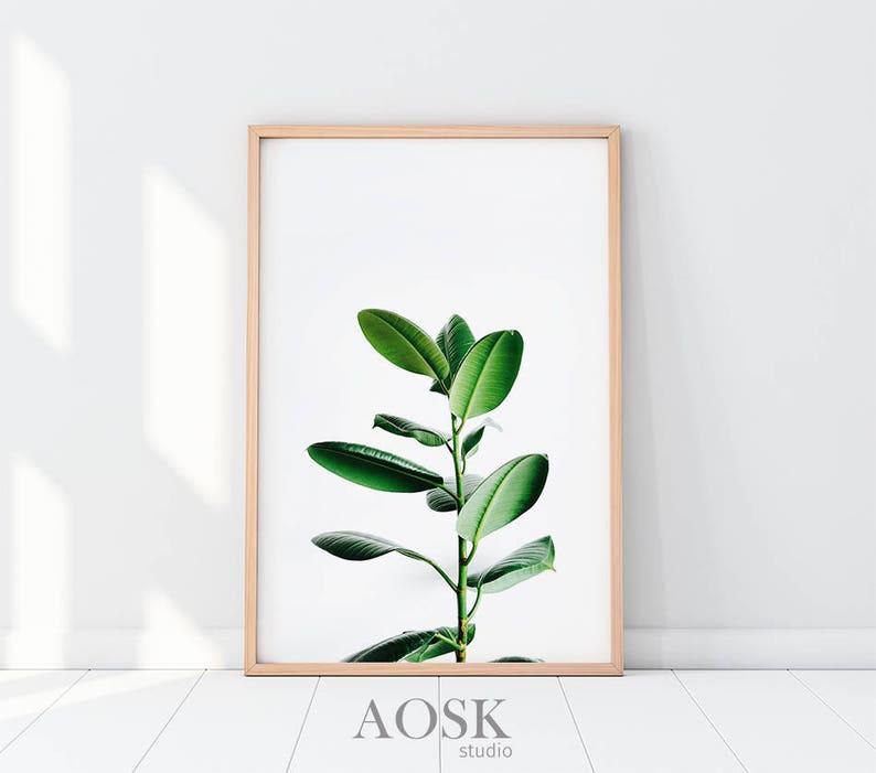 Wydruk Liści Plakat Roślin Art Druku Roślina Pozostawia Zdjęcie Druk ściany Roślin Zieleni Do Druku Zielony Roślin Art Wall Botaniczny Plakat