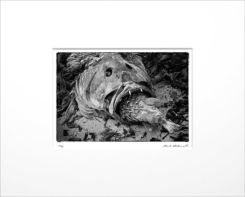 Danilo Böhme Two fish Black and White image 0