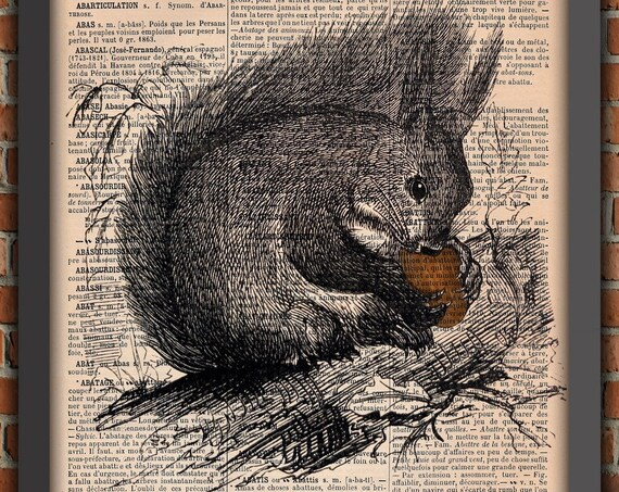 Squirrel cute Tree  Nuts Forest Animal Vintage Art Print french Home Decor Gift Poster Original Dictionary Page Print Authentique prints