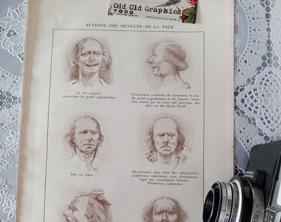 vintage medical medicine poster face muscles oddity board cabinet of curiosities vintage french authentic 1935