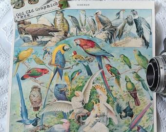 Birds poster eagle parrot french Vintage authentic 1932  Ornithology Ornithologist vintage illustration