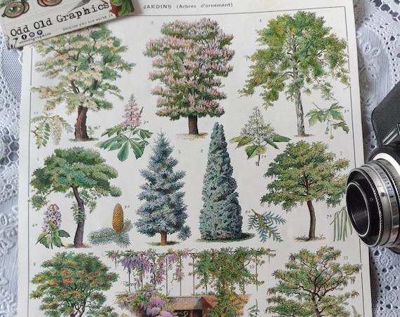 vintage french poster authentic print 1932 botanical Trees ornament Garden forest Landscape designer vintage authentic illustration