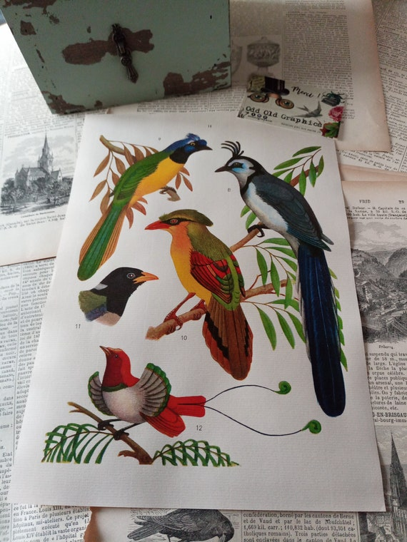 Poster birds printing ornithology board book vintage french gift old colors  french laid paper
