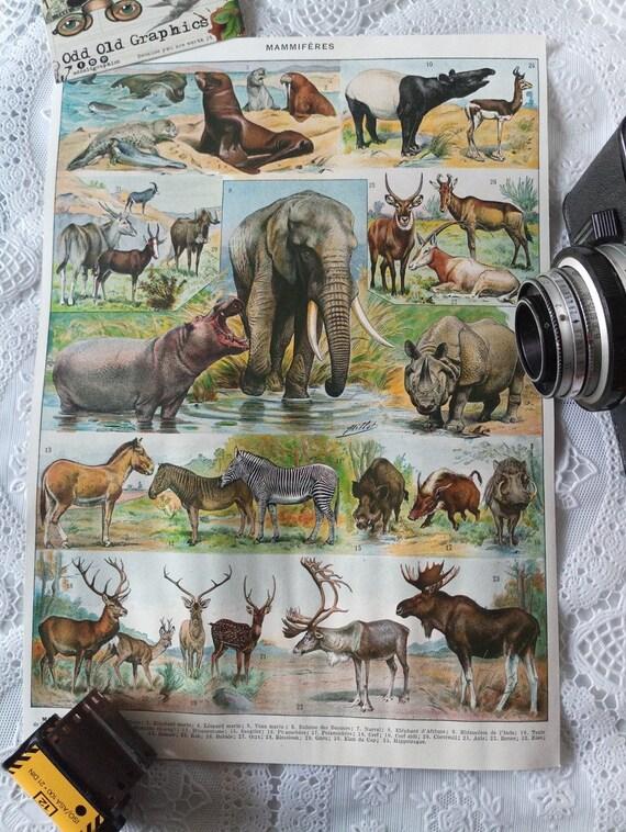 vintage authentic 1932 poster animals mammals color elephant hippopotamus zebra wild boar etc vintage authentic illustration