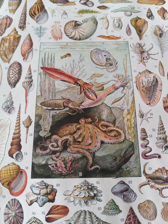 Poster Sea Ocean Octopus Moluscs Seashells Vintage Maritime Poster Authentic 1932 French Coastal Decor Upcycling