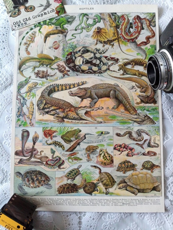 vintage authentic 1932 poster animals Reptiles Batrachians Amphibians Snakes Turtles Crocodile authentic vintage illustration