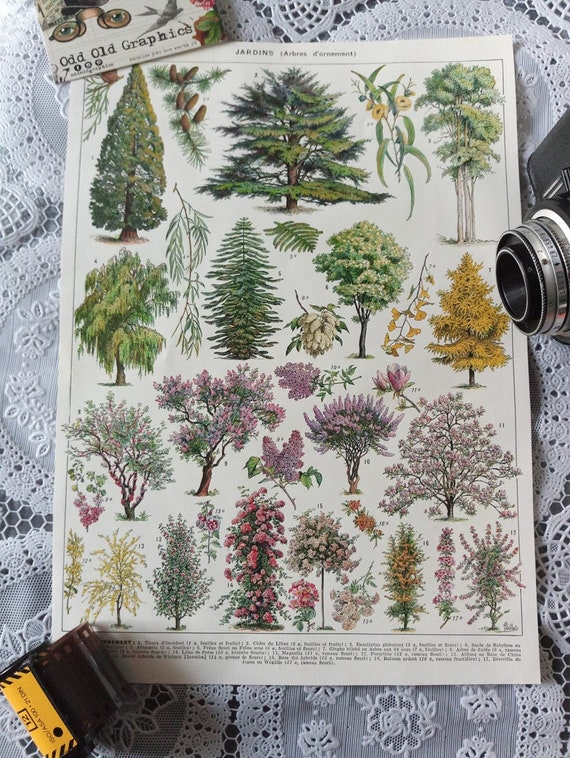vintage french poster authentic print 1932 botanical Trees - numeber two-  ornament Garden forest Landscape designer vintage  illustration