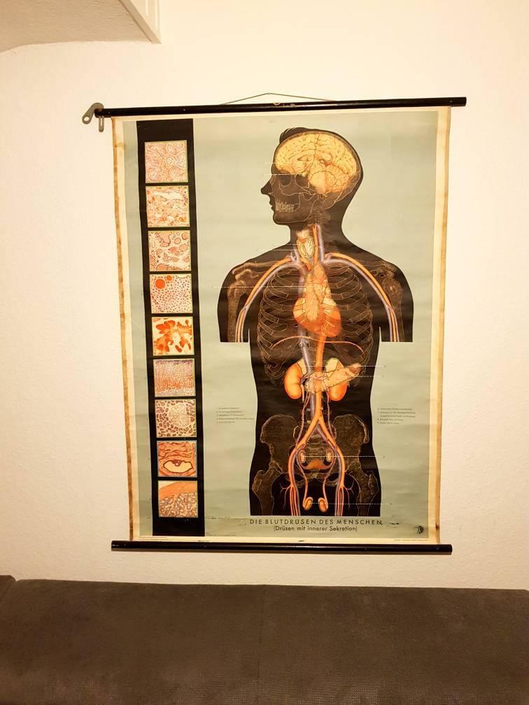 Größe Anatomie Poster Medizinische Wandkunst Die Blutdrüsen