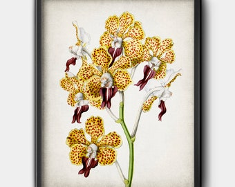 Orchid illustration | Etsy