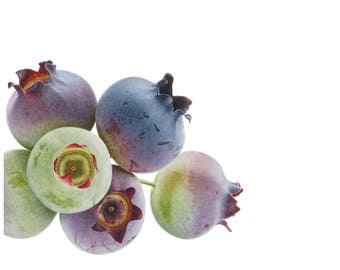Blueberries Limited Edition Giclee Print
