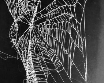 Real Orb Weavers Webs . Brilliant White on Black