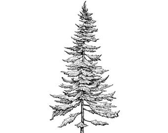 Pine Tree Drawing Etsy