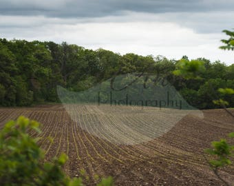 Overcast Farm Field Digital Photography Backdrop Background