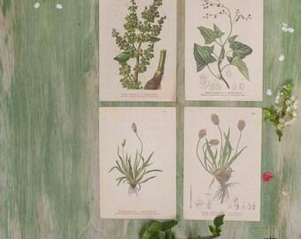 Set di 4 stampe botaniche piante verdi