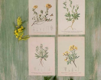 Set di 4 stampe botaniche fiori gialli e bianchi